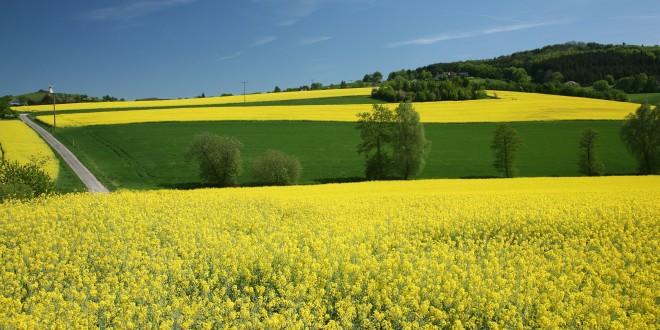 El Gobierno prepara la respuesta que dará en EE.UU. por la denuncia contra el biodiésel
