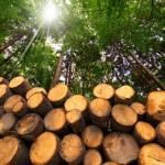 Entró en operaciones el primer proyecto de biomasa forestal del RenovAr