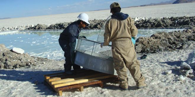 Jujuy le agrega valor a la industria del litio